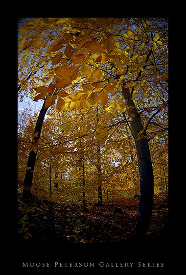 Vermont _9.jpg