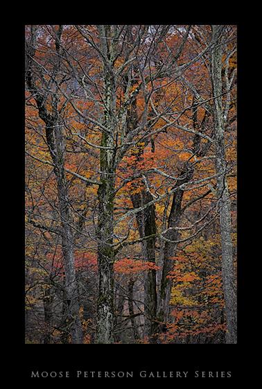 Vermont _91.jpg