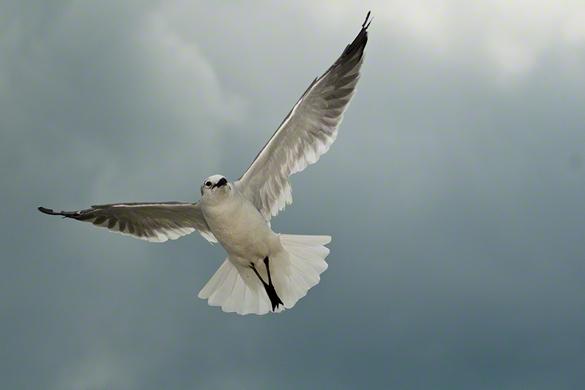 GullBird