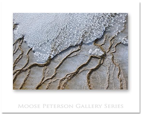 Yellowstone 16225