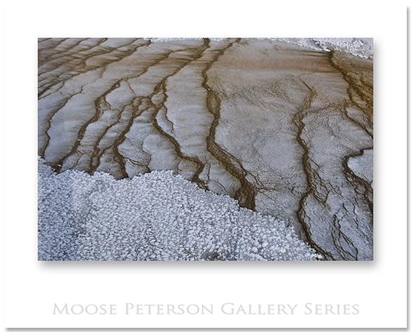 Yellowstone 16241