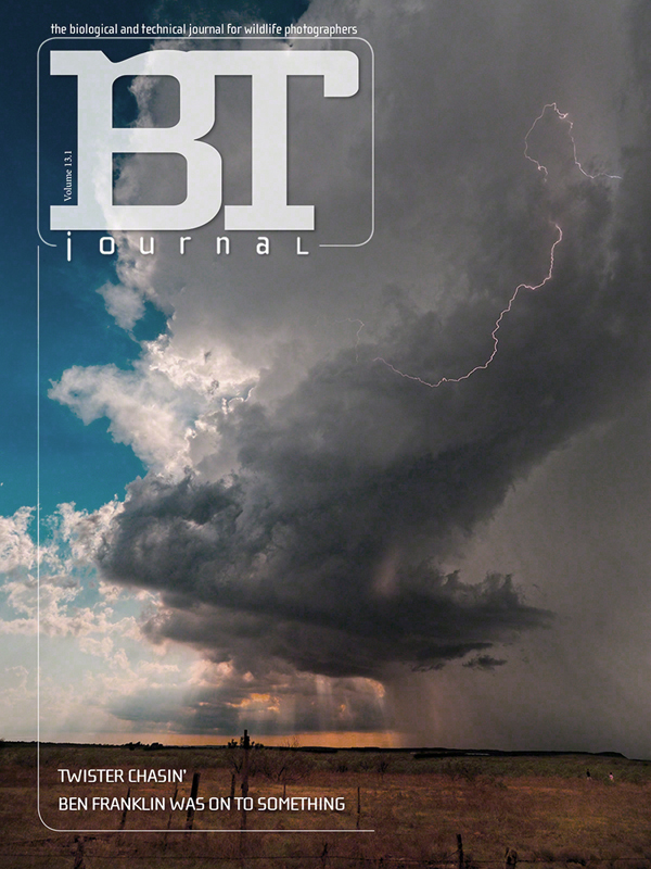 13.1cover