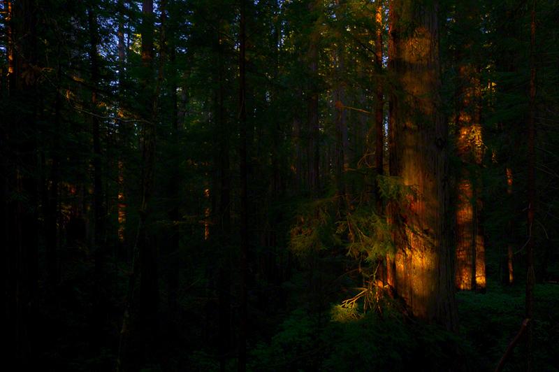 Del_Norte_Redwoods_0699