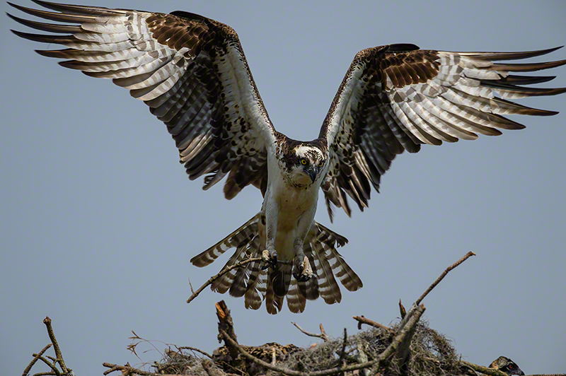 Osprey 0436