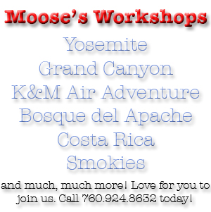 Moose's Classes & Workshops