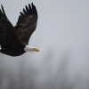 The Magic of Eagles