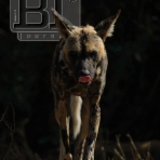 BTJ Africa is Out!
