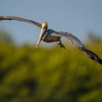 The Vertical Flight Shot