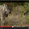 Africa Critter Magic