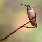 Sierra Bird Weekend
