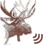 Moose Podcast #1