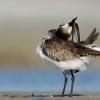 Texas Bird Photography Workshop