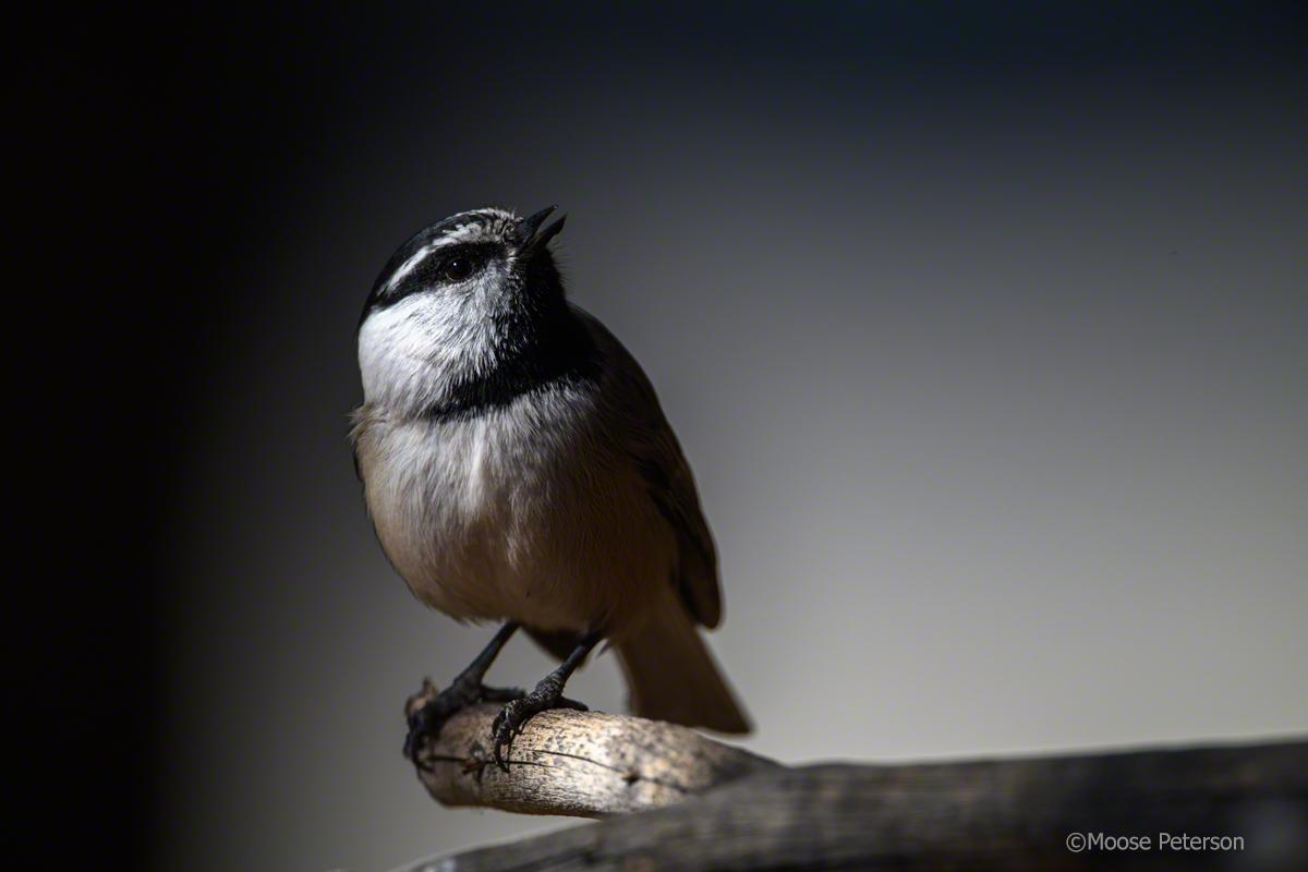 Bird Bath Birds
