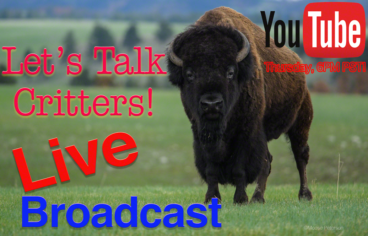 Live Broadcast – Critter Time!