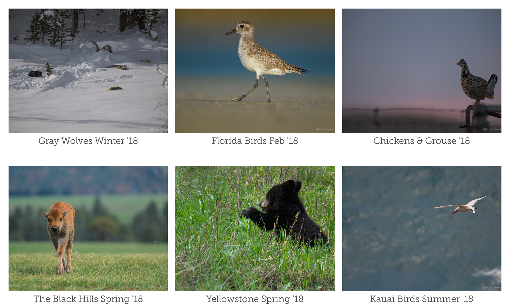 Kauai Bird Portfolio