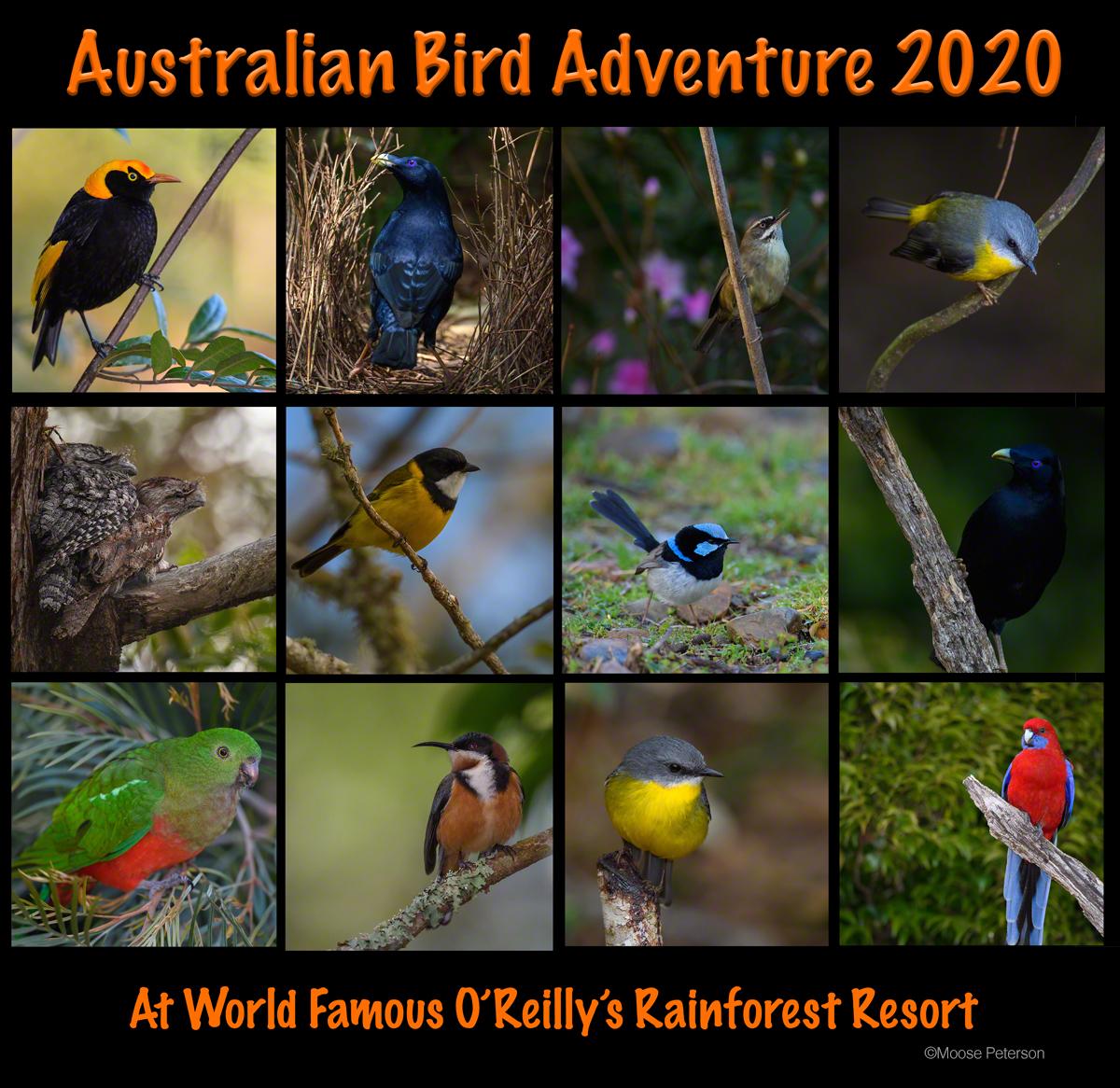 Australia Bird Adventure 2020!