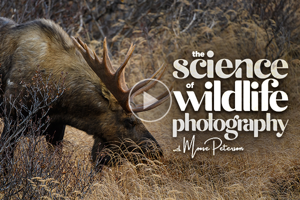The Science of Wildlife Photography – New Class