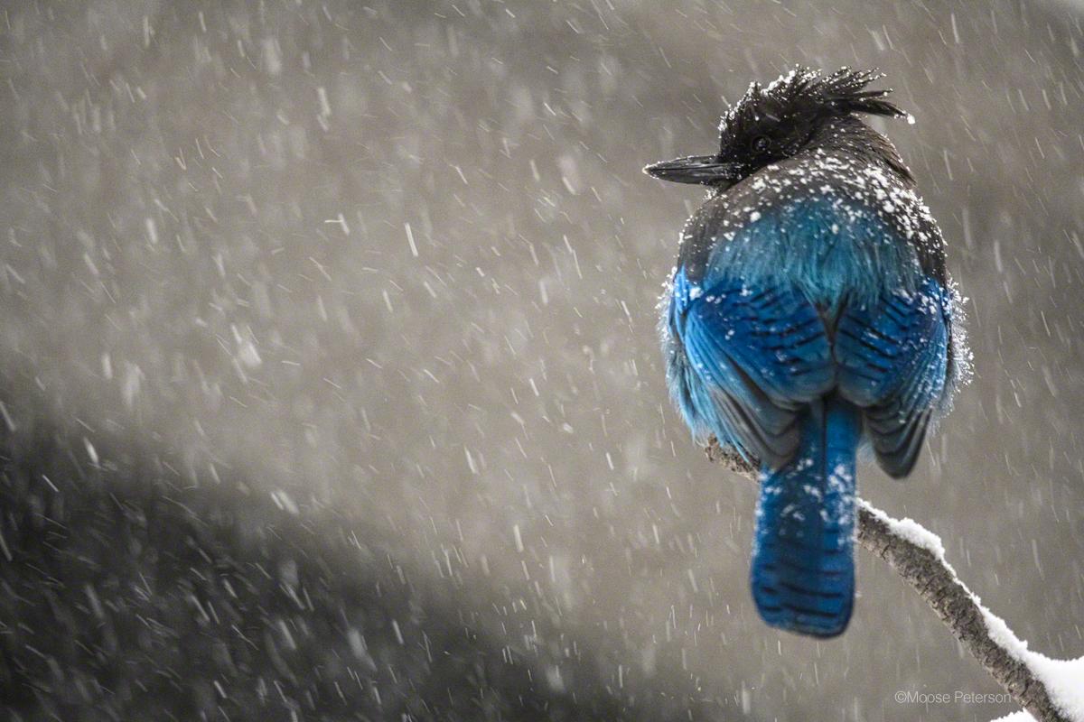 Starting Backyard Bird Photography