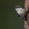 It's Nesting Bird Time!