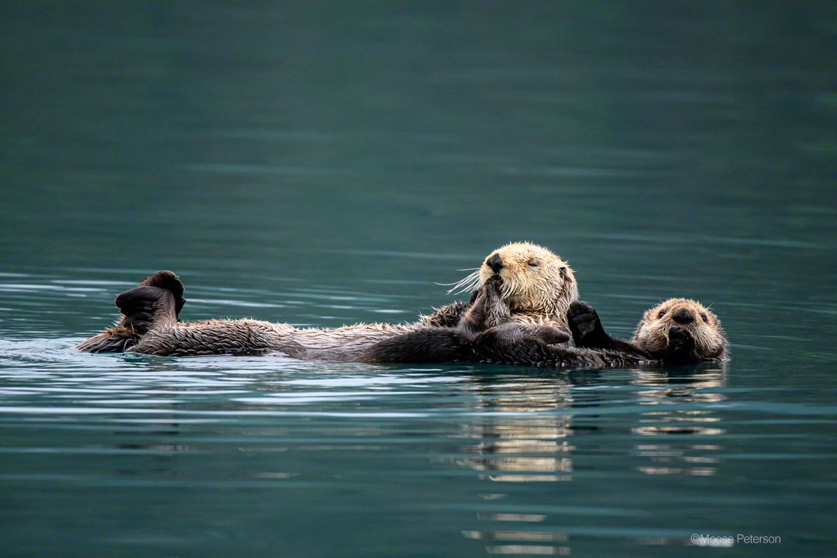 Otter Satisfaction!