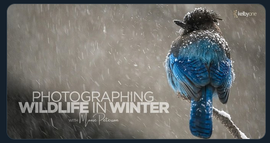 Photographing Wildlife In Winter