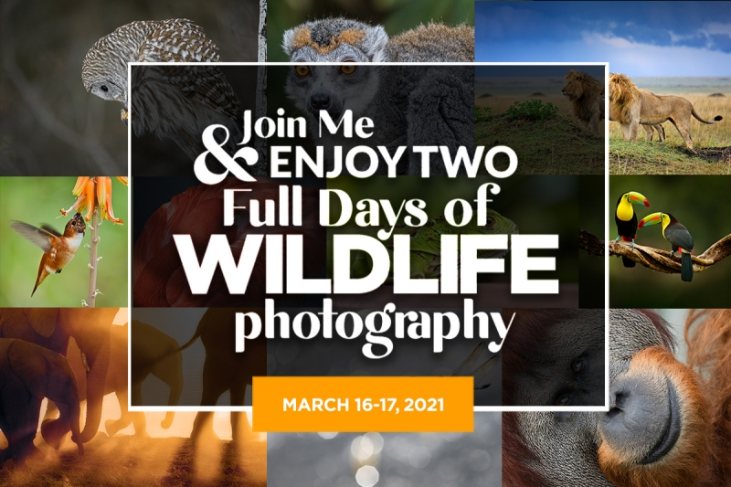 Wildlife Photography on a Whole New Level!